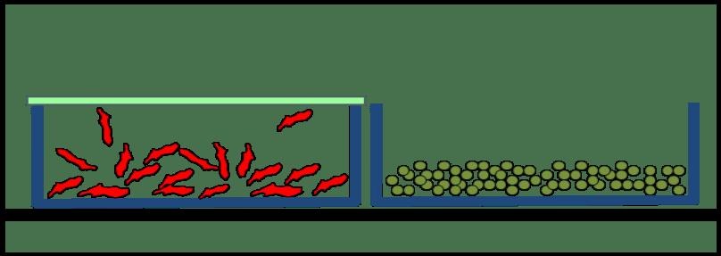 Zeichnung zweier Wannen zur Gefriertrocknung. Davon ist eine Wanne mit Membranabdeckung keimdicht verschlossen.